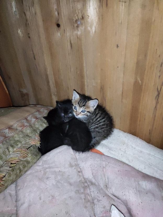 外婆家的小猫咪,第2张
